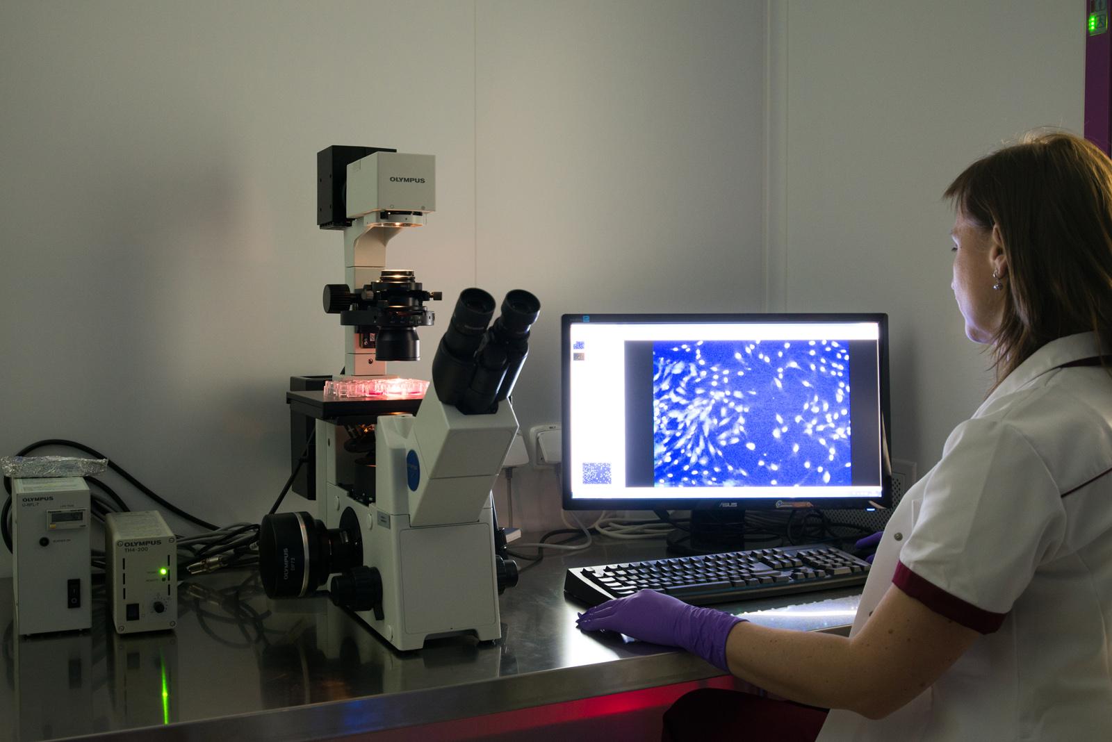 kontrola kvality MSC - imunofluorescence