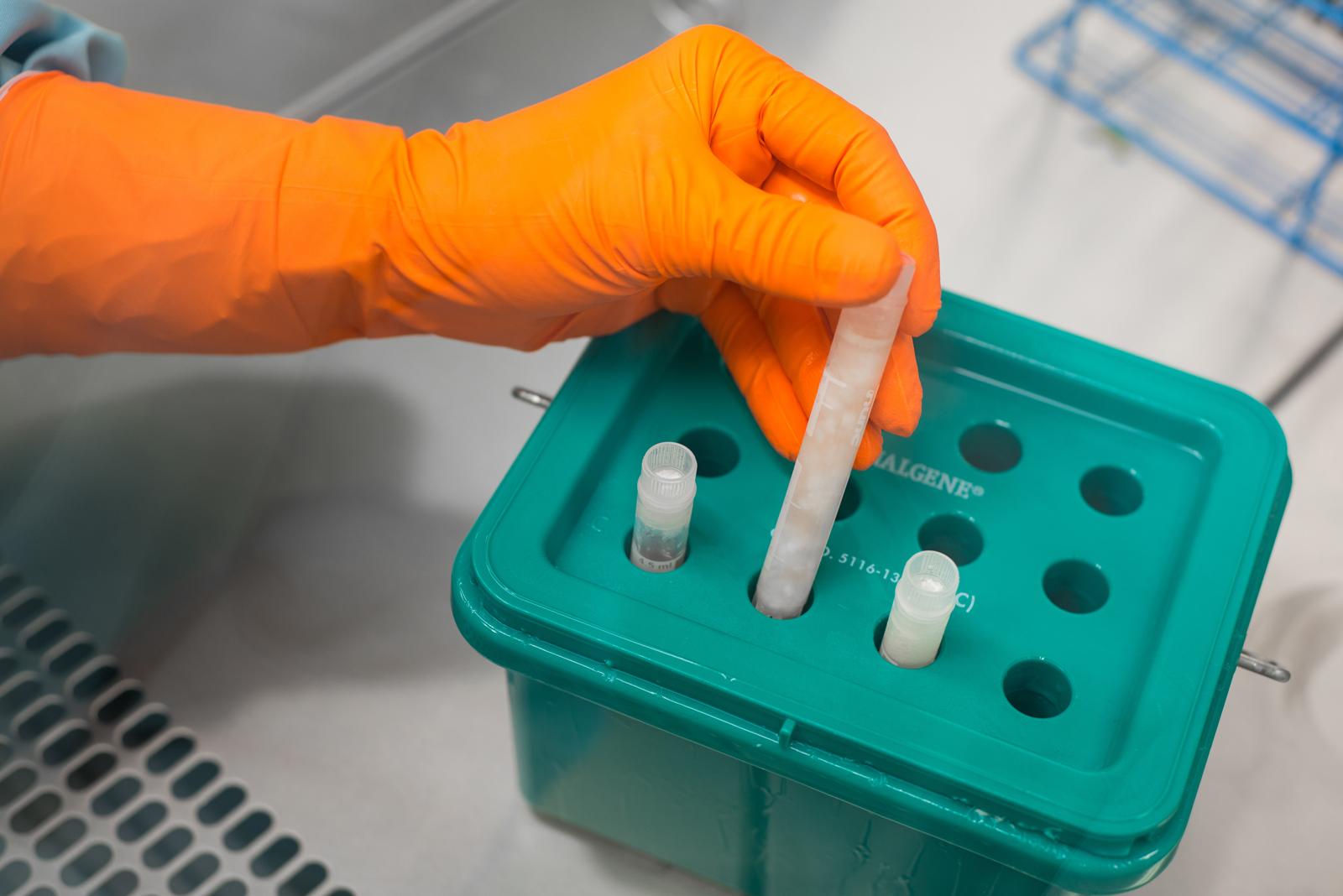 příprava tkáně na kryokonzervaci
